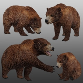 3D animated Brown Bear with PBR materials and 31 animations