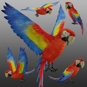 3D animated Macaw Parrot with PBR materials and 26 animations