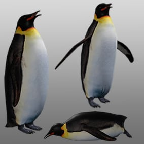 3D animated Emperor Penguin with PBR materials and 21 animations