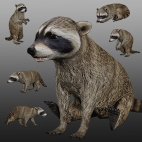 3D animated raccoon with PBR materials and 35 animations