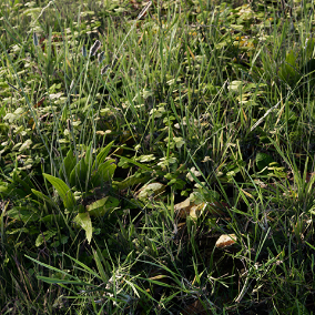 A high quality pack of clovers, grass and weeds created from real world scan data.