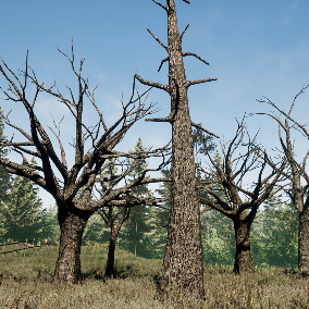 Old Tree Pack Low Poly High Quality Pack