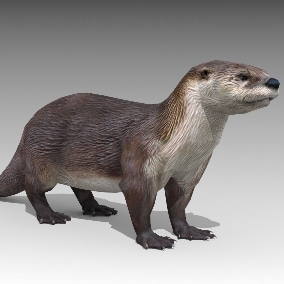 Otter 3d model Animations