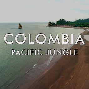 Pacific Jungle Soundscapes
