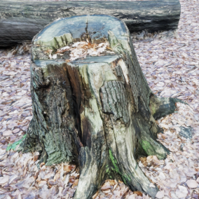 Pack of 10 photo-scanned, realistic tree stump meshes.