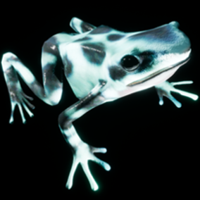 This is a 3D model with Animations of a Poison dart frog.
