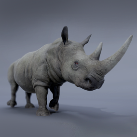***Included Inside African Animals Pack*** Here is an awesome rhinoceros ready to populate your projects. Perfect for African savanna environment.