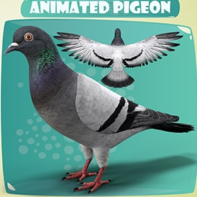 Hyper Realistic Animated Rock Pigeon Low Poly Model With The Realistic Animations.