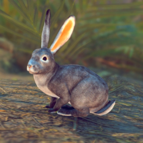 Beautiful Realistic Rabbits and Hares