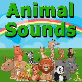 Animals Sounds is a fun and one of a kind animal sound library. It contains a massive 1212 sound effects and consists of both studio recordings and on location nature recordings.