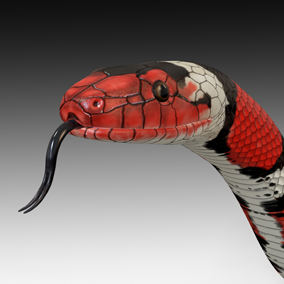 Animated detailed scarlet king snake with PBR textures.