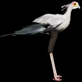 This is a 3D model and animations of a Secretarybird.