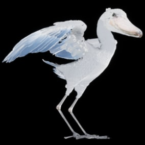 This is a 3D model and animations of a Shoebill.