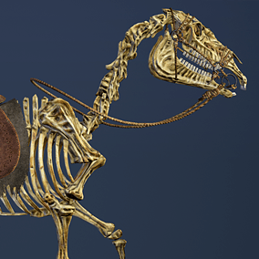 Animated skeletal horse in poor armor. Prefect for FPS and third person games. Uses same rig and animations as my Horse for Heroes.