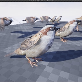 Sparrow 3d model animated