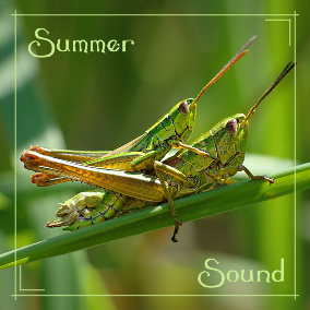 Easy going spawner of various crickets and other wildlife sounds around the player with fluent transition from night to day sounds.