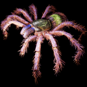 3D model and animations of Tarantula.