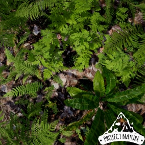 This pack contains different species of ferns. All meshes are optimized for game ready use.