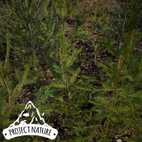 This pack contains different species of conifer plants. All models are build in a realistic and natural look with a moderate optimization.
