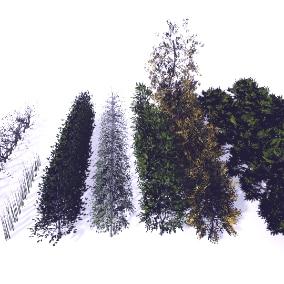Trees Gen02_04