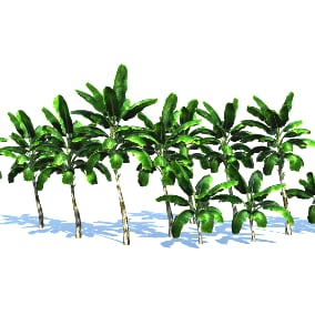 Trees Gen02 05