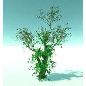 Trees Gen02_06 Dead Forest