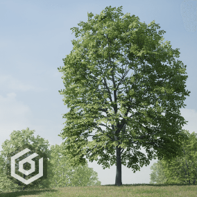 Pack of realistic maple trees