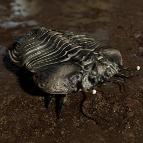 Trilobite with 10+ Animations