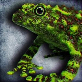 Animated Game Ready Vietnamese Mossy Frog