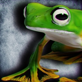 Animated Game Ready Wallace's Flying Frog