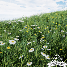 This pack contains a high number of wild flowers growing on european grasslands. All plants are photoscanned and fully wind animated.