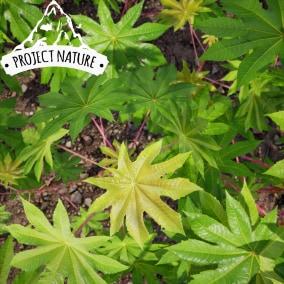 这个热带植物资源为你提供一套经过优化的交互式模型,用于制作热带自然风光的环境。